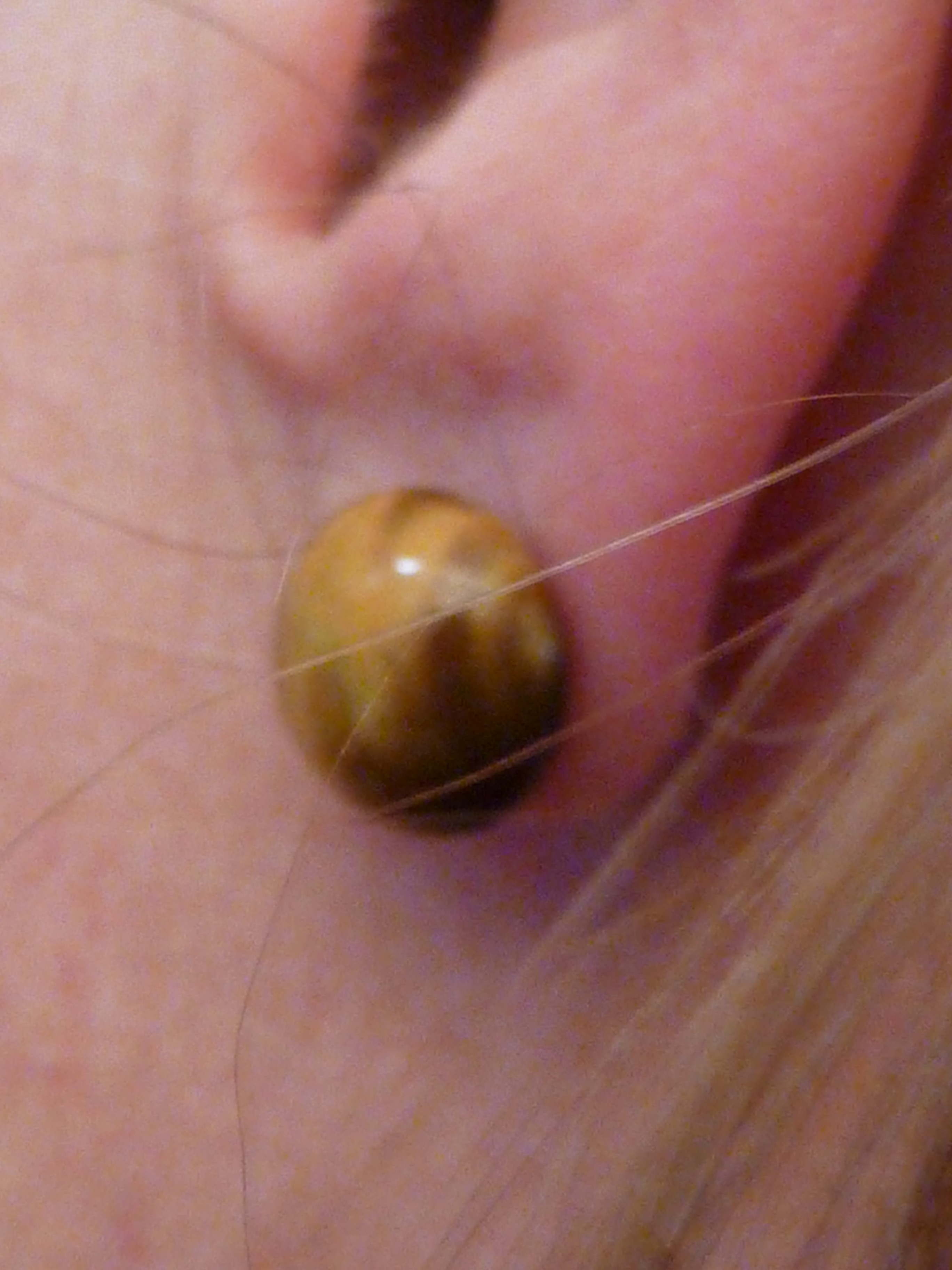 Properly Fitting Earring