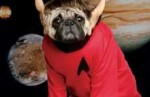 Pug With Spock Ears