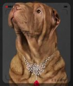 Dog jewelry - diamonds