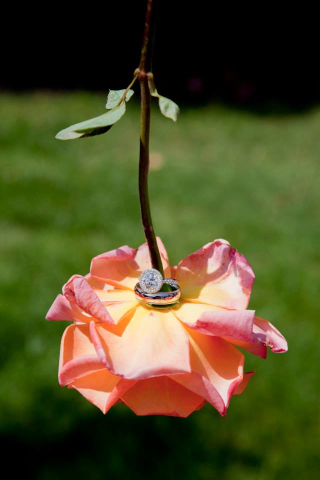 rose with wedding rings. Mad Photo.com image.
