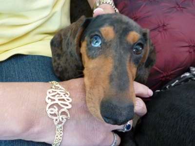 Ruth and Her Cutey Pie Pup, Who Approves of Her New Bracelet